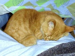 170107_4387股の間で寝てるトラ美ちゃんVGA