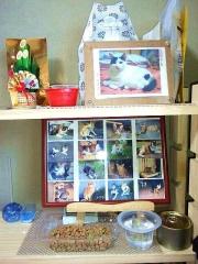 170114_4395 猫達の祭壇_縦VGA