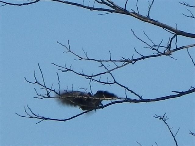 駐車場で見かけた野鳥-4