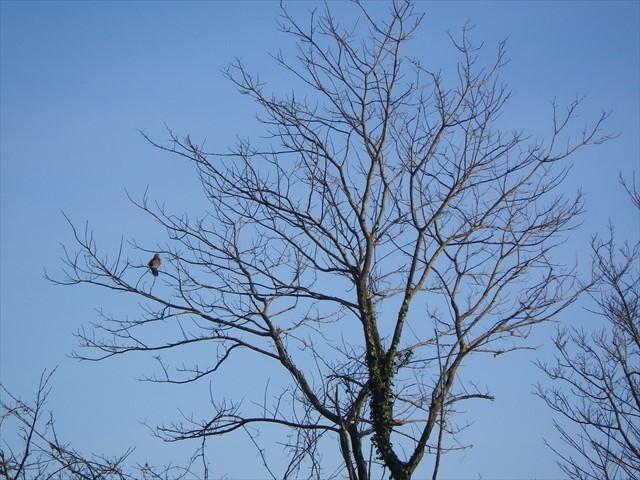駐車場で見かけた野鳥-3