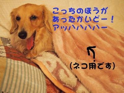 写真2338(№412)1