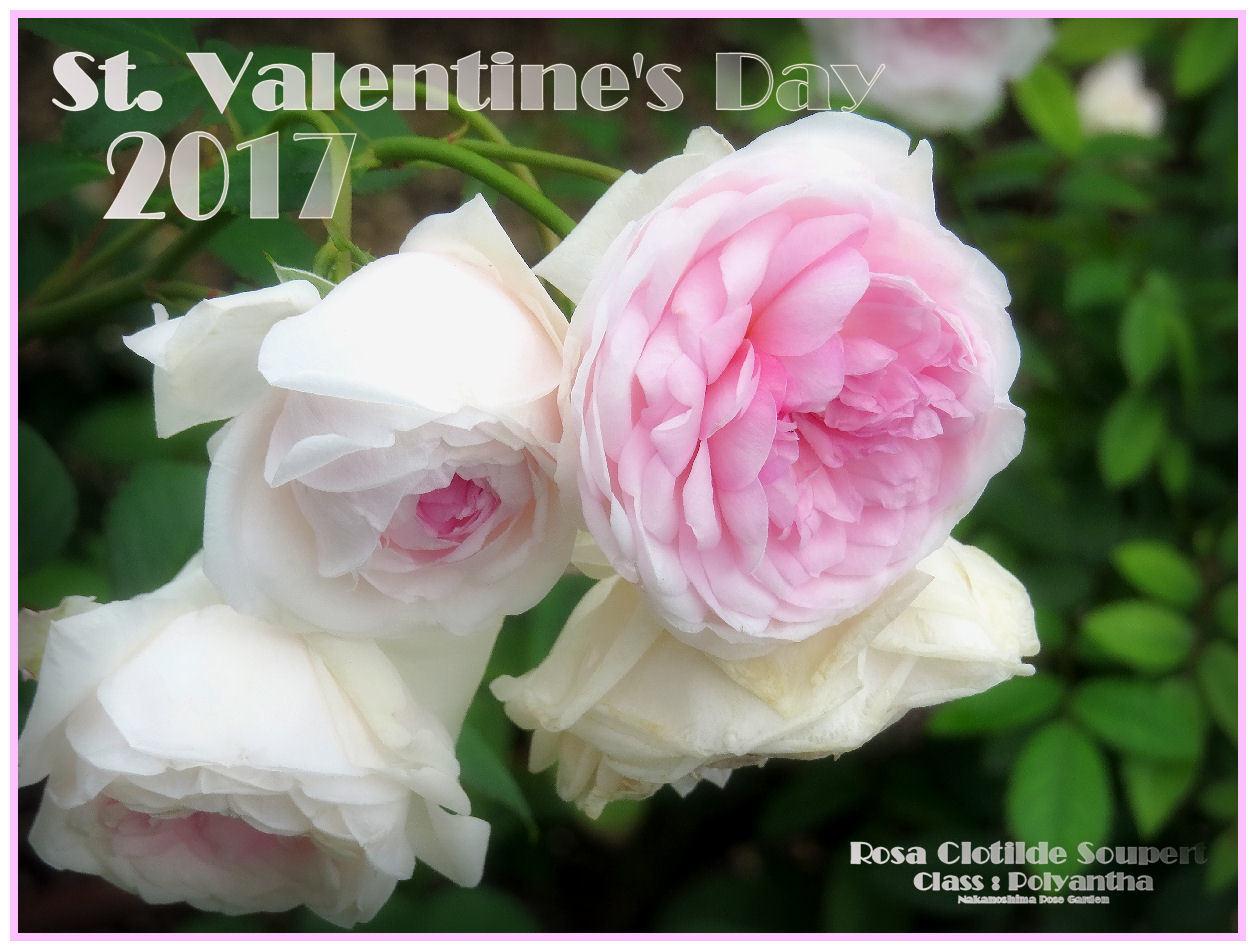 St. Valentine's Day 2017