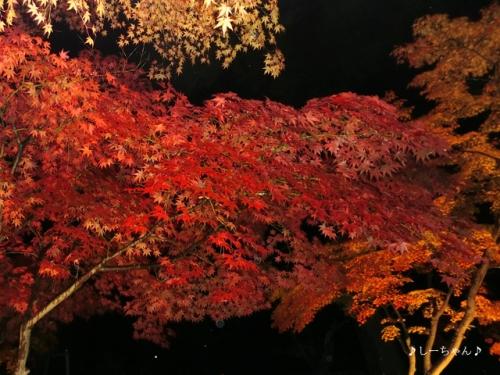 月の石もみじ公園2016_03