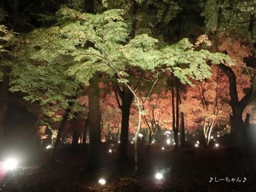 月の石もみじ公園2016_04