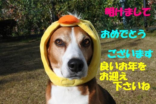 DSC_2489.jpg