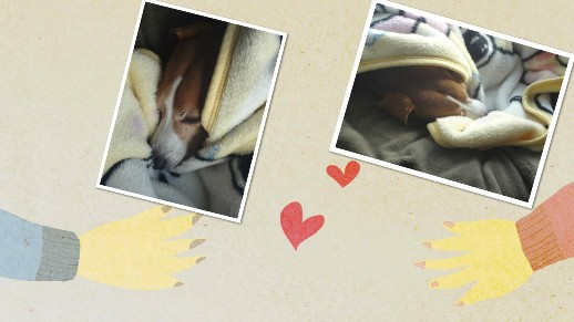 collage_photocat1125-4.jpg