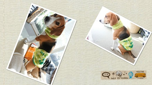 collage_photocat1126-3.jpg