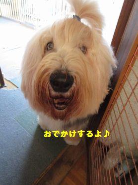 IMG_0579.jpg