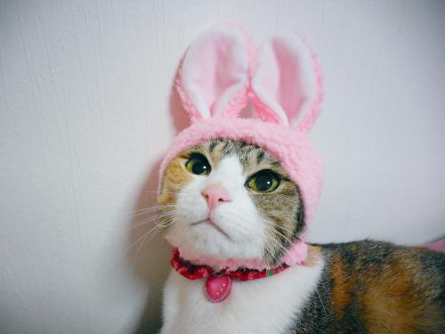 みくピンクウサギ