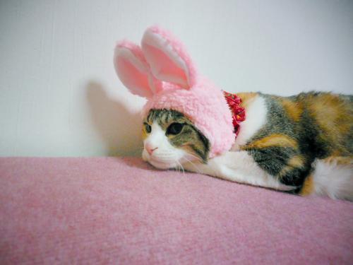みくウサギちゃん寝姿