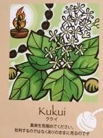 ククイカード(ハワイ州)の木より