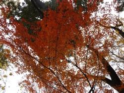 20161130井の頭公園の紅葉1