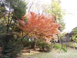 20161130井の頭公園の紅葉2