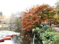 20161130井の頭公園の紅葉3