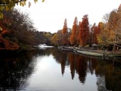 20161130井の頭公園の紅葉4