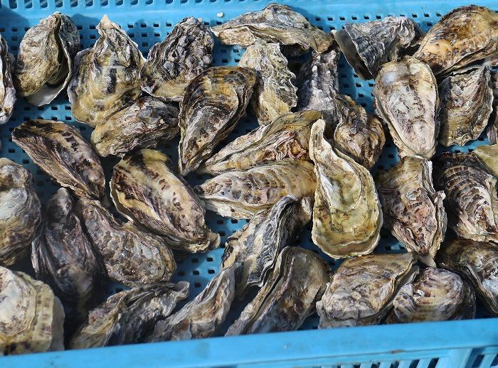 焼けたカキ 牡蠣祭り 29.2.4