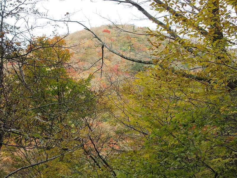 IMG6177JPG対山の紅葉