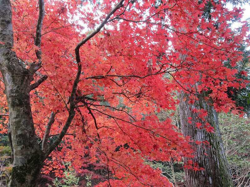 IMG6083JPG政所坊庭園の紅葉1