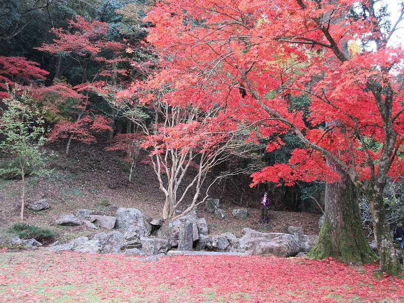 IMG6084JPG政所坊庭園の紅葉2
