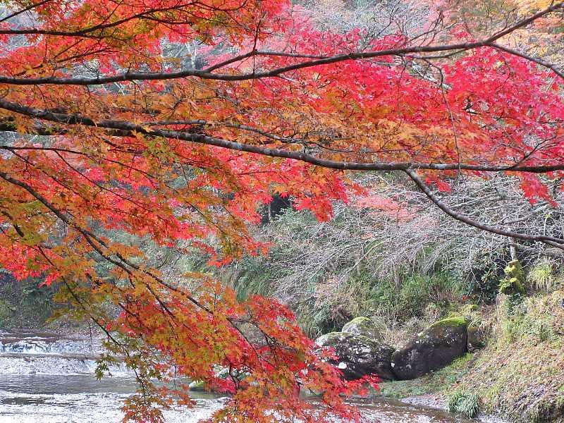 IMG6051JPG渓流の紅葉