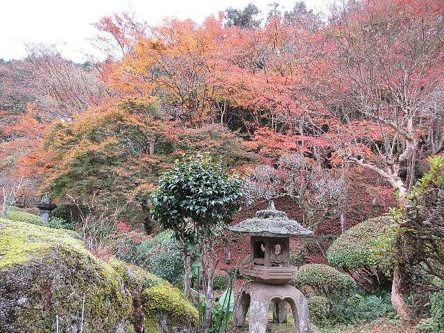 IMG6345JPG庭園の紅葉2