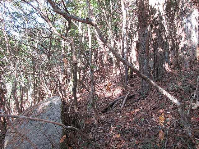 IMG6301JPG檜林を先に雑木林の急登