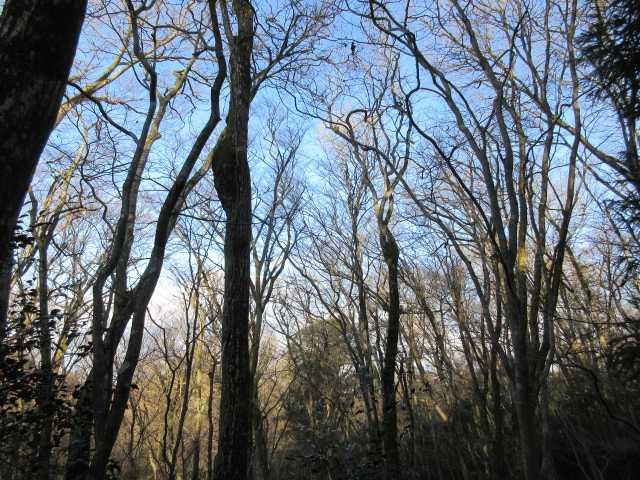 IMG6490JPGブナ林の平頂を歩く