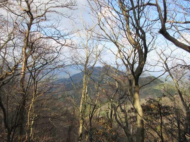 IMG6507JPG樹間に昼から登る障子ヶ岳が