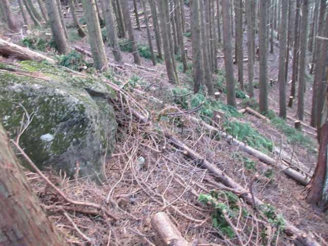 IMG6519JPG伐採が広範囲に進んで道を塞いでいる
