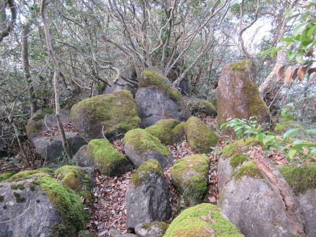 IMG6600JPG苔むした岩間を歩く