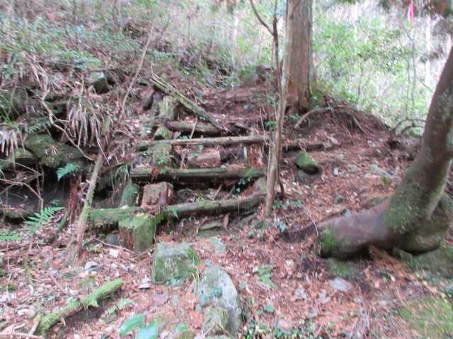 IMG6720JPG朽ちけた梯子を巻いて林道に上がる