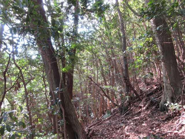 IMG7145JPG3の山への急登