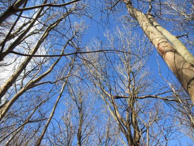 IMG7152JPG落葉樹林