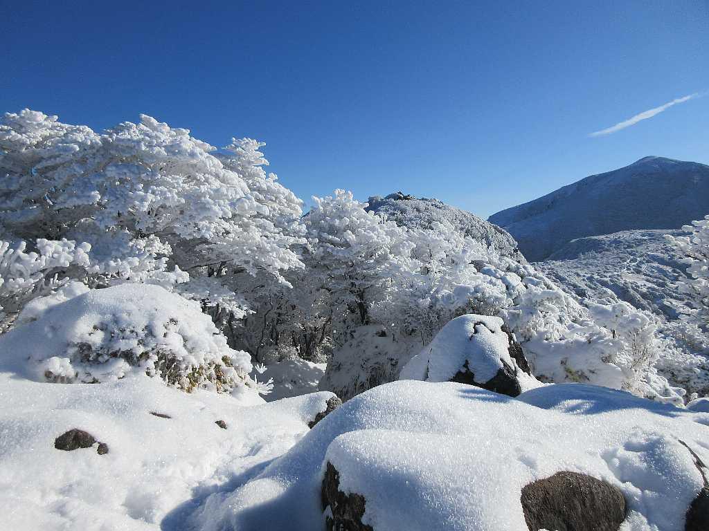 IMG7346JPG雪と霧氷