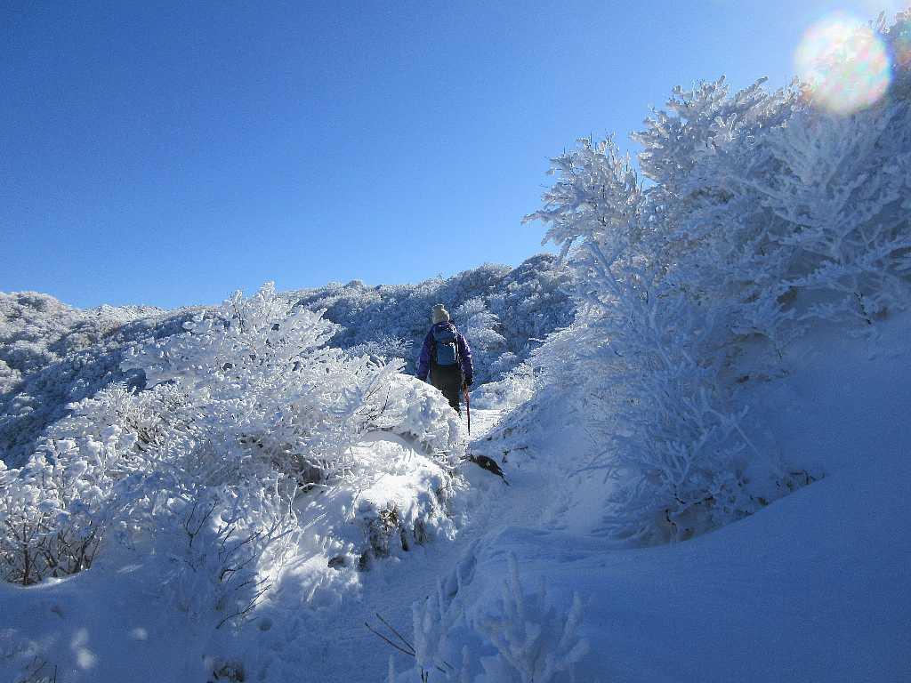 IMG7361JPG霧氷の道