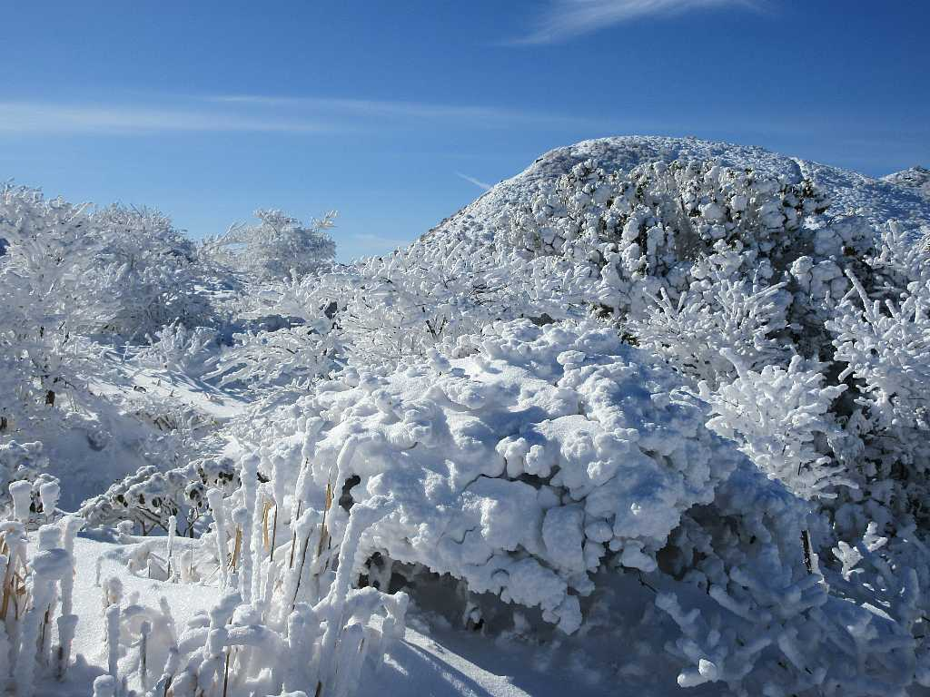 IMG7366JPG西千里ケ浜の霧氷
