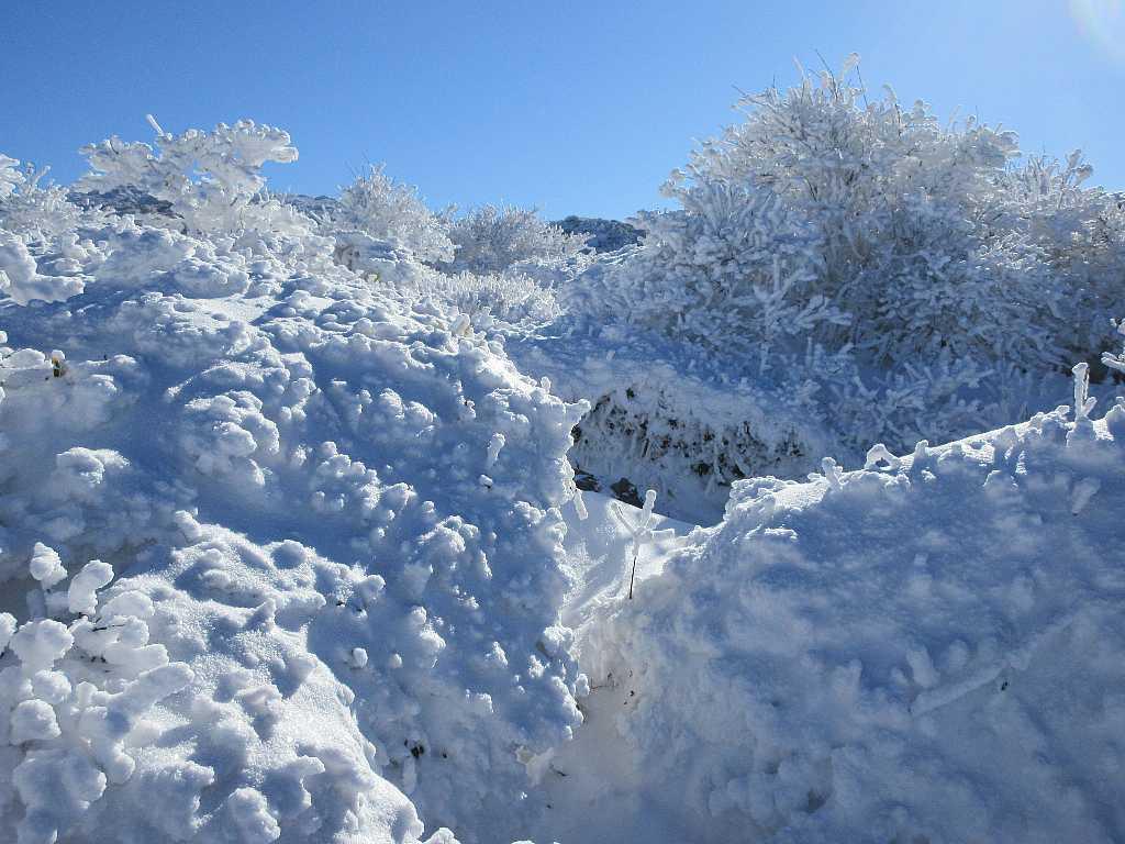 IMG7367JPG西千里ケ浜の霧氷2