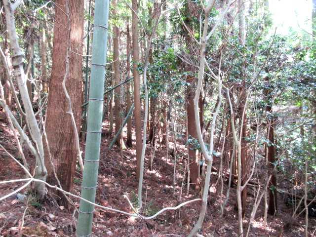 IMG7655JPG竹林