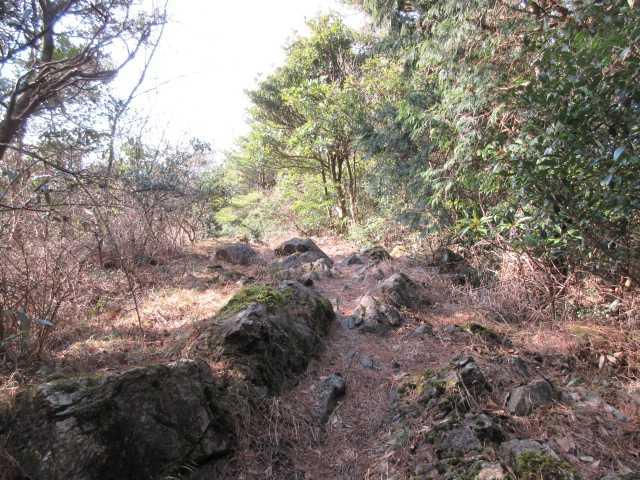 IMG7788JPG松の木の多い下山路