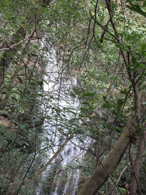 IMG7905JPG樹間から3の滝