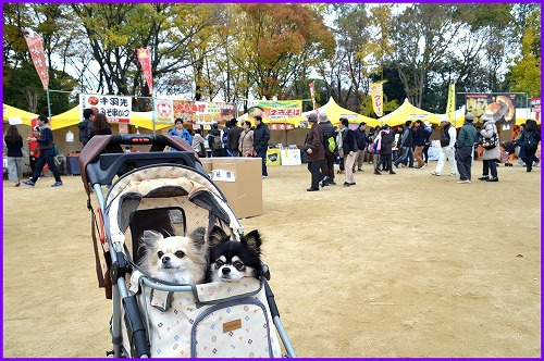 20161123OBC (5)