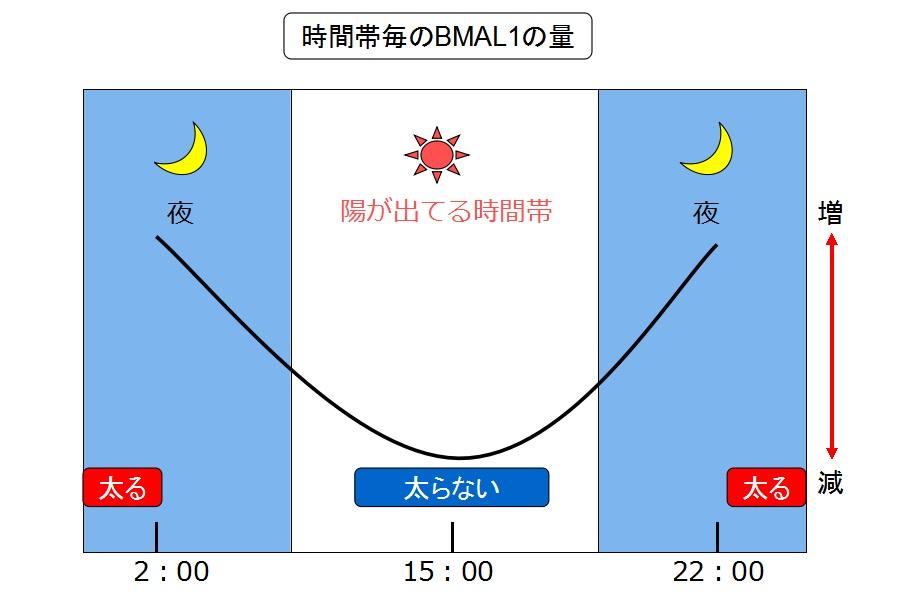 BMAL1の変化量