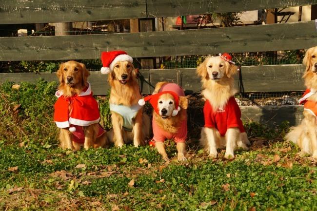 クリスマスパーティー_7772