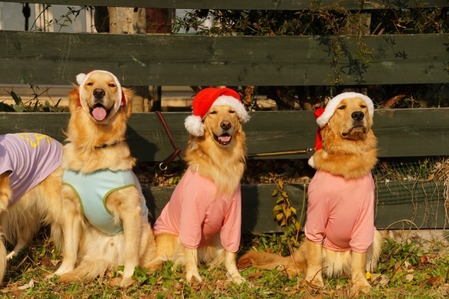 クリスマスパーティー_7891_01