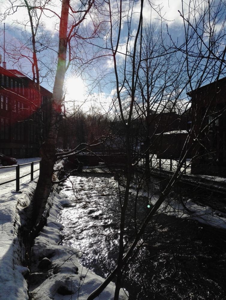 フィンランド 南部 冬の太陽