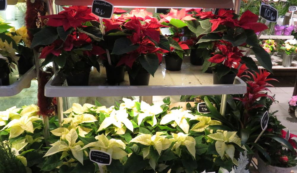 フィンランド エスポー Sello 花屋 クリスマス