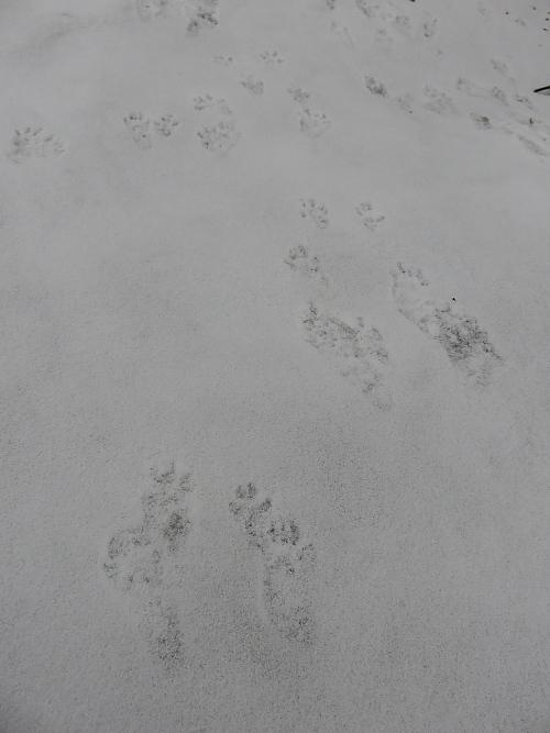 フィンランド 冬 氷 動物 リス