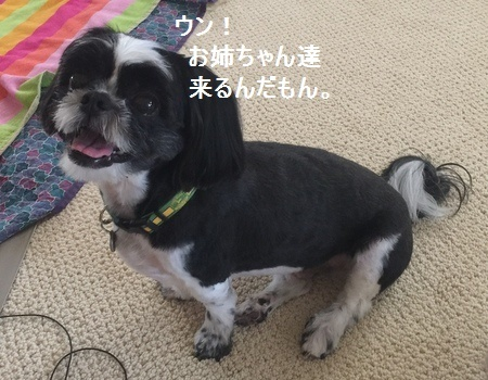 IMG_0231moji.jpg
