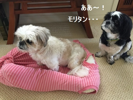 IMG_8079moji.jpg