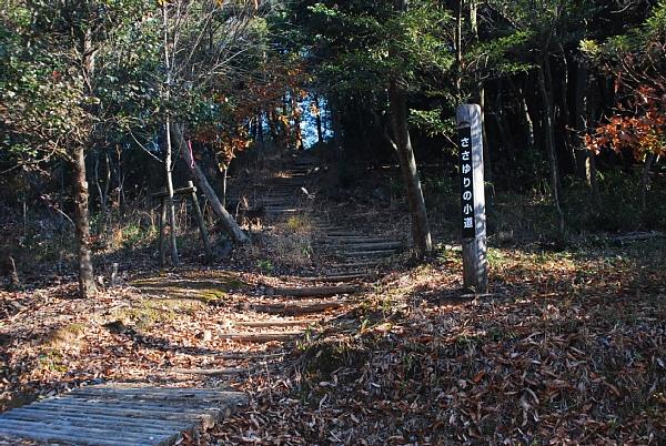 sasayurikomiti12181.jpg